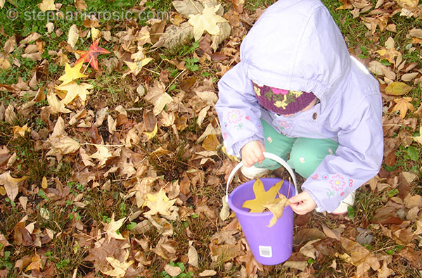 leaf-collecting-stephanierosic